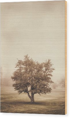 A Tree In The Fog Wood Print by Scott Norris