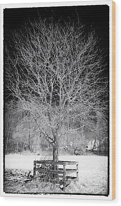 A Tree In The Snow Wood Print by John Rizzuto