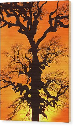 A Tree Is An Object Of Beauty Xii Wood Print