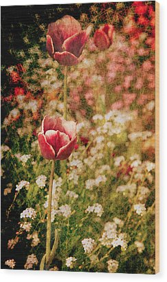 A Tulip's Daydream Wood Print by Loriental Photography