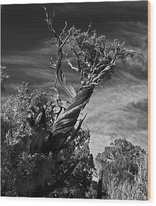 Wood Print featuring the photograph A Twisted Life  by Eric Rundle