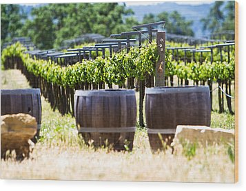 A Vineyard With Oak Barrels Wood Print