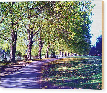 A Walk In The Park Wood Print by A Dx