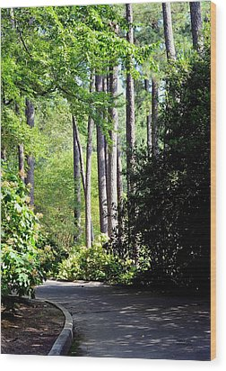 A Walk In The Shade Wood Print by Maria Urso