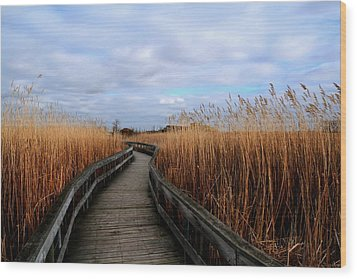 A Walk Through The Phragmites Wood Print by Larry Trupp