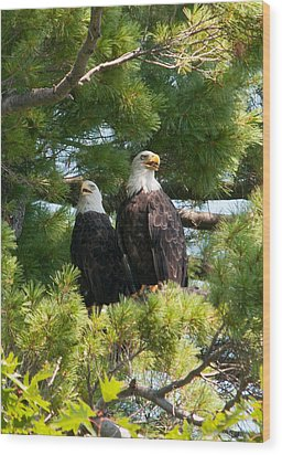 A Watchful Pair Wood Print by Brenda Jacobs