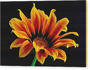 A Waving Flower Wood Print