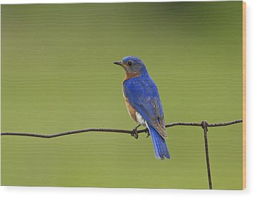 Wood Print featuring the photograph A Well Deserved Rest by Gary Hall