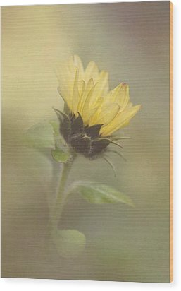 A Whisper Of A Sunflower Wood Print by Angie Vogel
