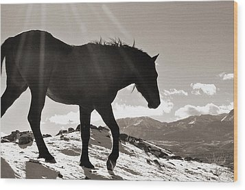 Wood Print featuring the photograph A Wild Horse In The Mountains by Lula Adams