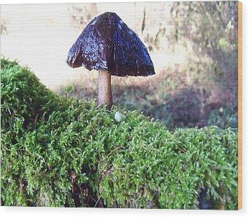 A Winter Mushroom Wood Print