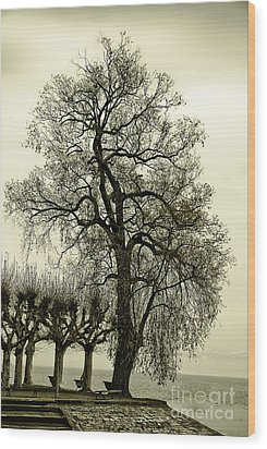 A Winter Touch Wood Print by Syed Aqueel