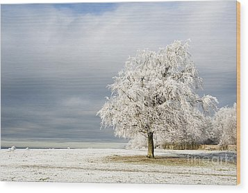 A Winter's Morning Wood Print by Anne Gilbert