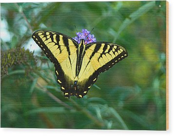 A Yellow Butterfly Wood Print by Raymond Salani III