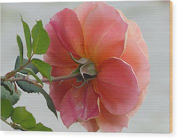 About Face Rose Wood Print by Cindy McDaniel
