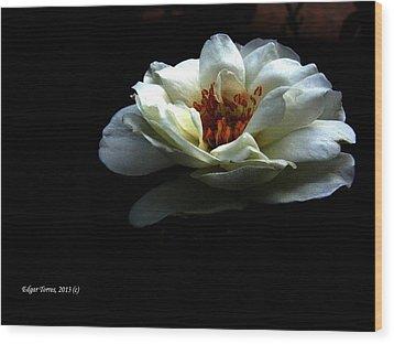 Abrigame En Tu Ternura Wood Print by Edgar Torres