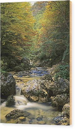 Abruzzo National Park In Italy Wood Print by George Atsametakis