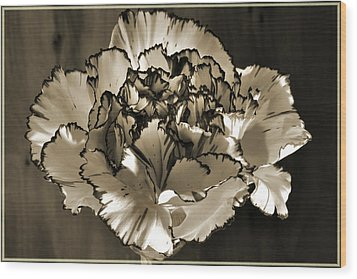 Abstract Carnation Wood Print by Terence Davis