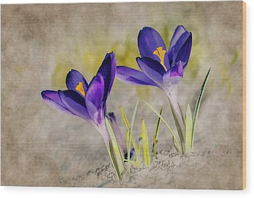 Abstract Crocus Background Wood Print by Jaroslaw Grudzinski