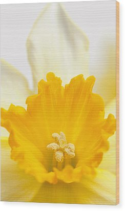 Abstract Daffodil Wood Print