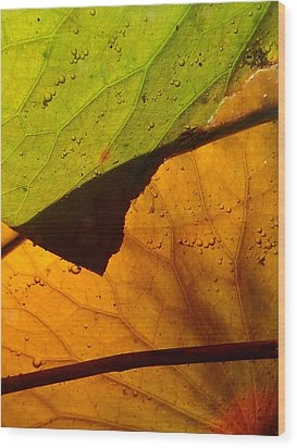 Abstract Lillypad Wood Print