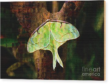 Abstract Luna Moth Painterly Wood Print by Andee Design