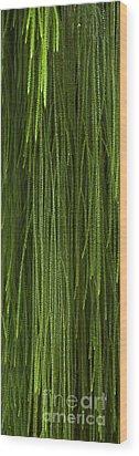 Abstract Nature Wood Print by Svetlana Sewell