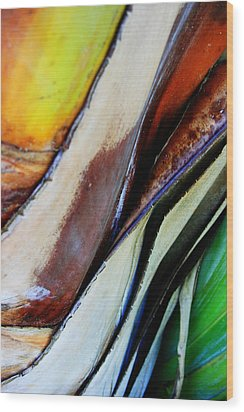 Wood Print featuring the photograph Abstract Palm 3 by Heather Green