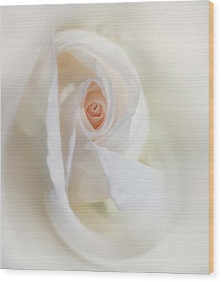 Abstract Pastel Rose Flower Wood Print by Jennie Marie Schell