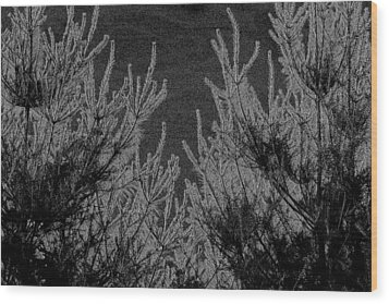 Abstract Pine Trees Wood Print by Jp Grace