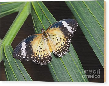 Butterfly On Leaves Wood Print by Tamara Becker
