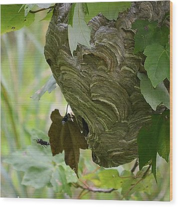 Abstract Wasp Wood Print by Mary Zeman