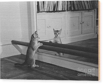 Abyssinian Kitten In Dance Studio Wood Print by Joan Baron