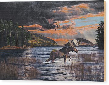 Acadia Feast Wood Print by Brent Ander