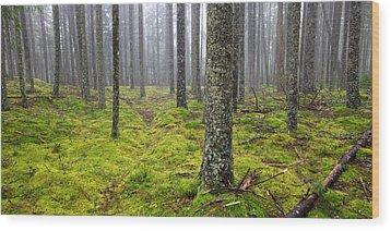 Acadia Woods Wood Print by Patrick Downey