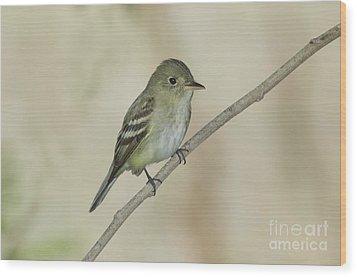 Acadian Flycatcher Wood Print by Anthony Mercieca