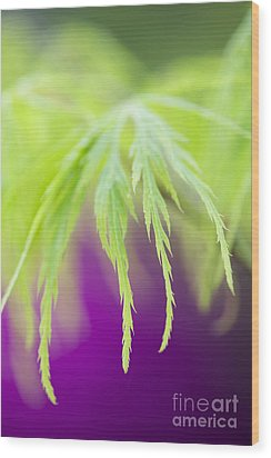 Acer Leaves Wood Print by Tim Gainey