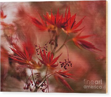 Acer Storm Wood Print by Mike Reid