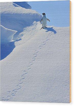 Adelie Penguin On Bergie Bit Wood Print by Tony Beck