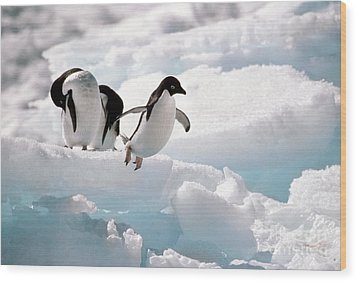 Adelie Penguins Wood Print by Art Wolfe