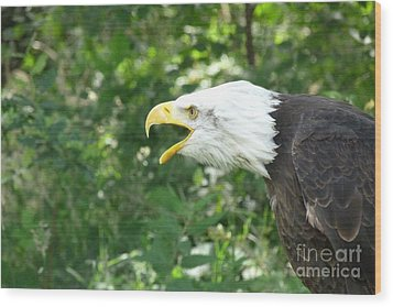 Wood Print featuring the photograph Adler Raptor Bald Eagle Bird Of Prey Bird by Paul Fearn