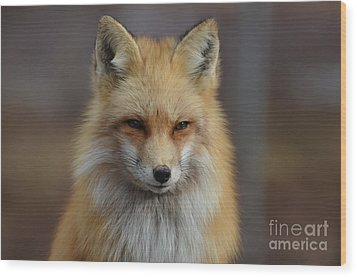 Adorable Red Fox Wood Print by DejaVu Designs