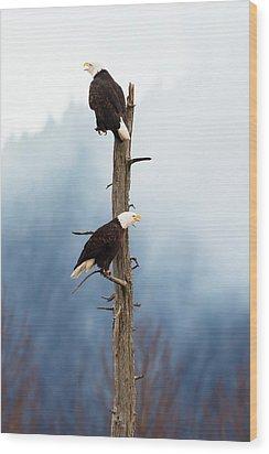 Adult Bald Eagles  Haliaeetus Wood Print by Doug Lindstrand
