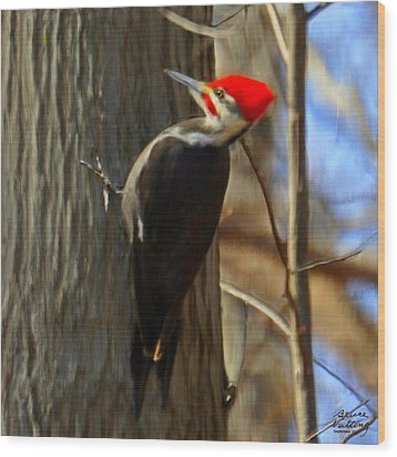 Adult Male Pileated Woodpecker Wood Print