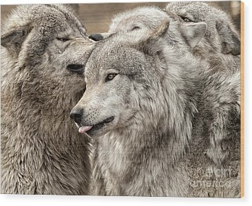 Wood Print featuring the photograph Adult Timber Wolf by Wolves Only