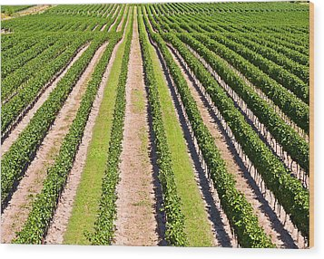 Wood Print featuring the photograph Aerial View Of Vineyard In Ontario Canada by Marek Poplawski