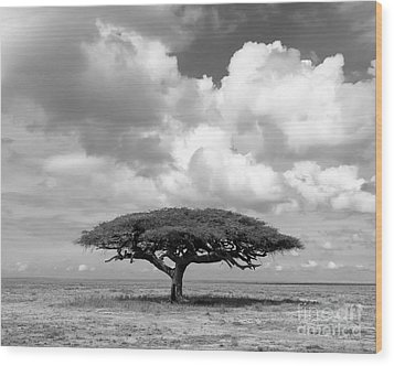 African Acacia Tree Wood Print by Chris Scroggins