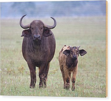 Wood Print featuring the photograph African Buffalo And Calf by Chris Scroggins