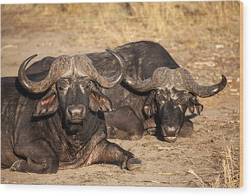 African Buffalo Wood Print by Craig Brown