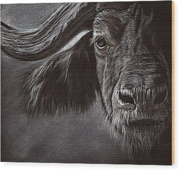 Wood Print featuring the drawing African Buffalo by Heidi Kriel